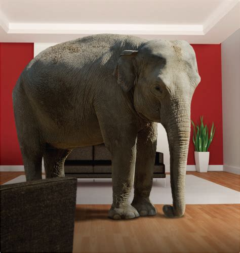 elephants in the living room the elephant in the living room living room