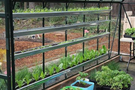 gutter vegetable garden growing vegetables in a greenhouse spinach lettuce