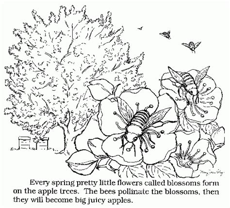 apple farm coloring pages harvest colouring pages apple picking coloring pages