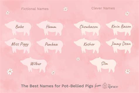 names  pet pot bellied pigs