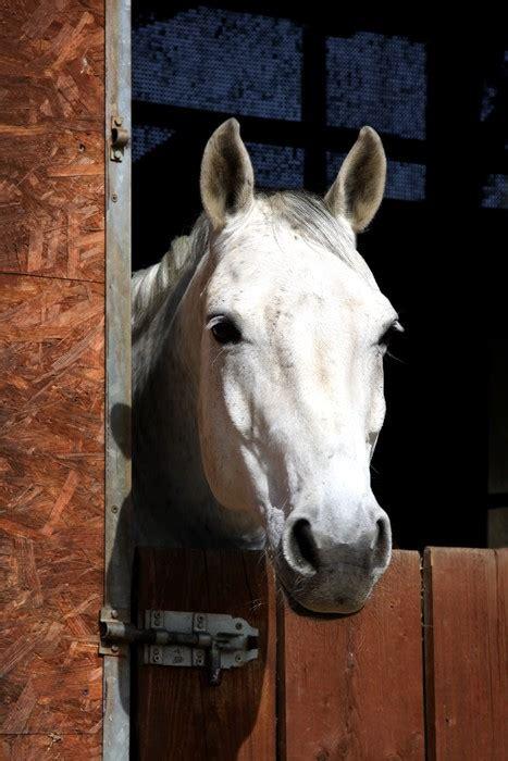 stall pferd fototapete pferd im stall pferd s 228 ugetier pixers de
