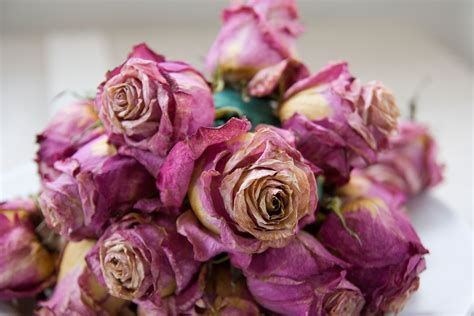 Dried Flowers by How To Flowers 5 Awesome Ways To Preserve A Bouquet