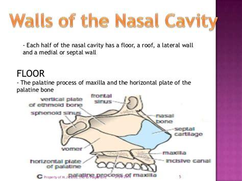 Floor Of The Nasal Cavity by Nasal Cavity