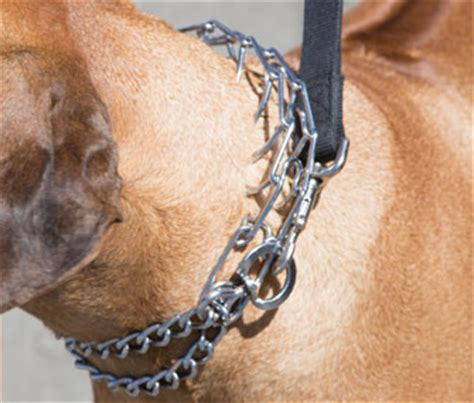 pinch collar why this veterinarian thinks prong collars are bad for dogs