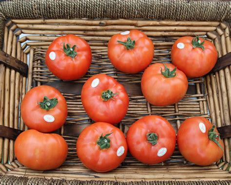 cuisiner morilles s馗h馥s precio tomate y otras hortalizas se disparan por