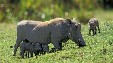 imagenes animales de africa los 20 animales m 225 s fascinantes de 193 frica