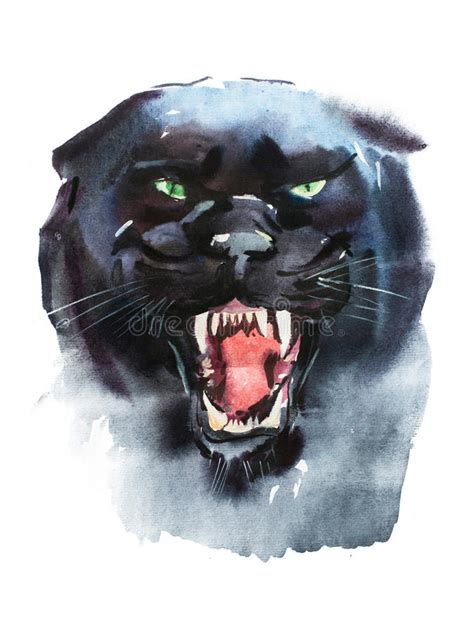 watercolor drawing  angry  panther animal portrait  white background stock