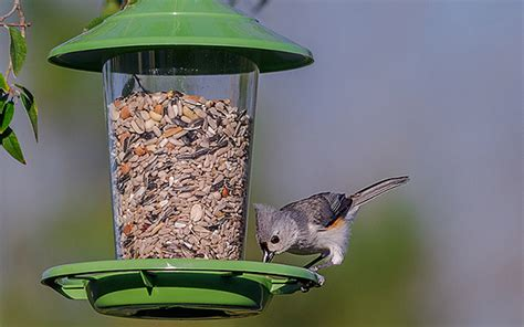 here s what to feed your summer bird feeder visitors all