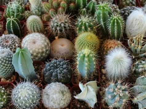 Succulents Plants Adaptations For Kids | cactus facts for kids world of succulents