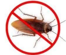 scarafaggi volanti in casa scarafaggi o blatte in casa scopri come eliminarli