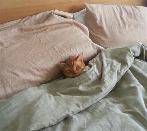 26 photos of dogs and cats tucked in for bed ned hardy