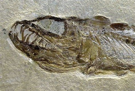 fishing for fossils in the north sea the lost world of doggerland cochise college p