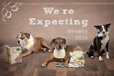 puppy announcement creative ways to include your in your next big announcement barkpost