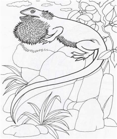 coloring page bearded dragon bearded dragon coloring pages download free printable