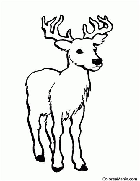 Imagenes Para Colorear Venado | colorear ciervo venado de agua animales del bosque