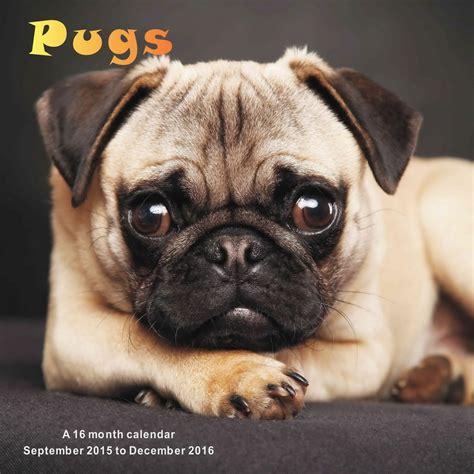 pug calendars pugs calendar 2016 mgdog45 pug breeds