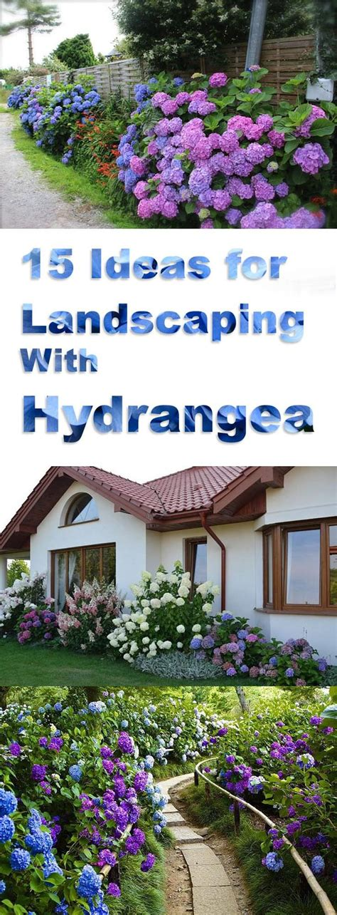 landscaping  hydrangeas  garden design ideas
