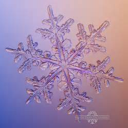 Snowflakes pretty in pink lagniappe a little bit extra