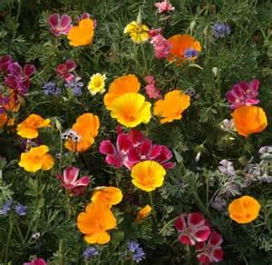buy northeast native wildflower seed mix