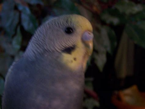 does petco sell dogs what type of parakeets does petco sell i don t judge p and how do you them