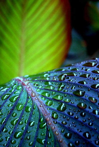 beautiful water drip leaf patterns and textures wow beautiful water