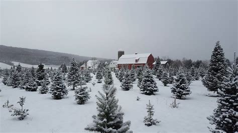 christmas tree farm near me appleron wi best tree farms to cut your own tree near buffalo