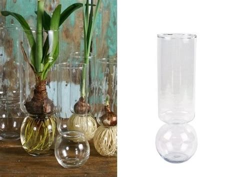 Bulbs In Vases by Bulb Vases Set Of 2 From Wisler Plant