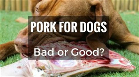 is ham bad for dogs doghelpful