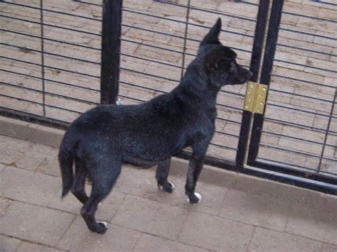 small dogs   adoption uitsig animal rescue centre
