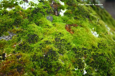 mossy green moss green life in the foothills