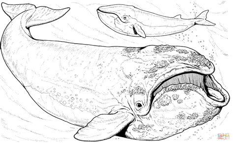 minke whale coloring page coloriage baleine bor 233 ale baleine du groenland