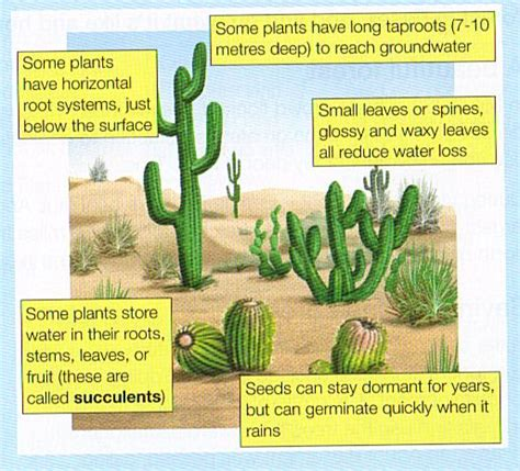 what are some plant adaptations in the tropical rainforest vegetation and wildlife part 2 tropical