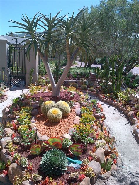 backyard cactus garden best 20 barrel cactus ideas on outdoor cactus garden