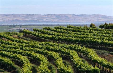 d arenberg wines mclaren vale australia hours address
