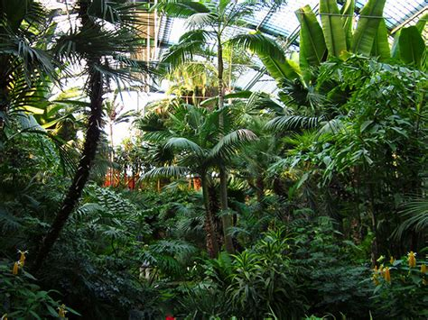 palme garten botanical garden frankfurt palmengarten frankfurt tourism