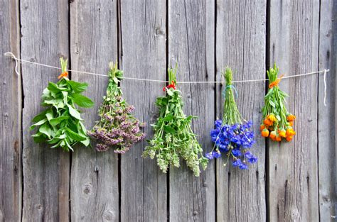 natural ways to keep bugs away from your garden girls