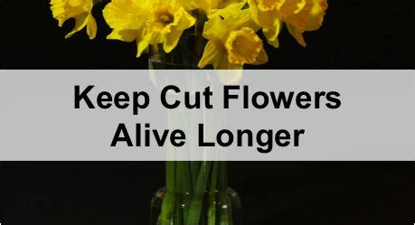 How To Keep Flowers Alive Longer In A Vase how to keep cut flowers alive longer for all the many bouquets my hubby brings me for the