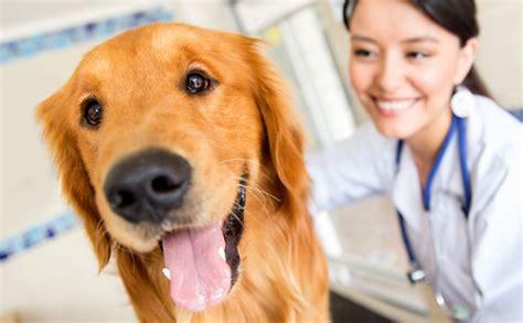imagenes de medicas veterinarias medicina veterin 225 ria o curso que cuida dos animais