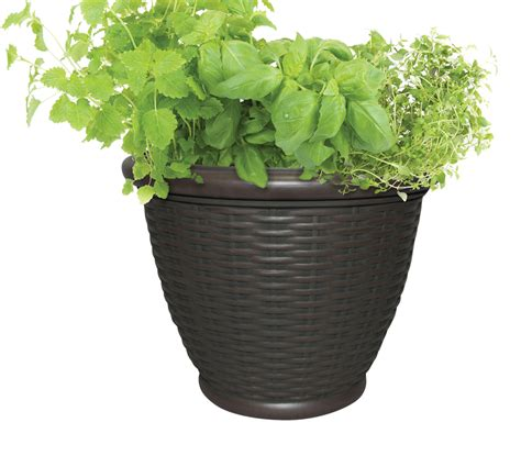 Planter Pics by Growing Vegetables And Herbs In A Container Garden
