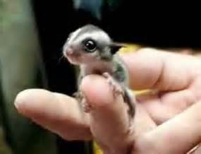 everything mixed smallest cutest animals in the world