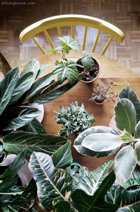 como decorar plantas con macetas macetas diy para decorar con plantas blog decoraci 243 n con