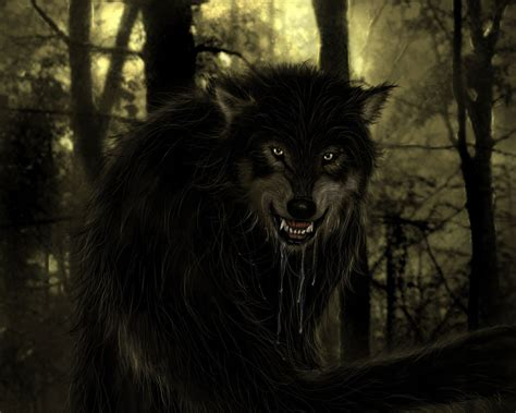 imagenes lobo negro hombres lobos taringa