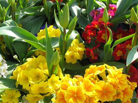 imagenes varias com various flowers free stock photo public domain pictures