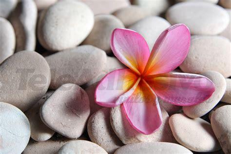 imagenes flores relajantes piedra flor
