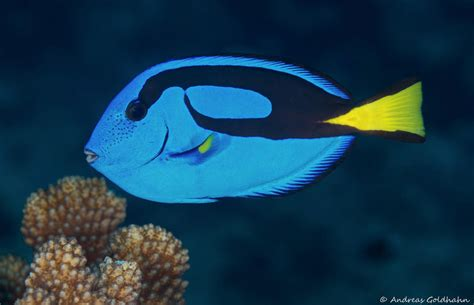 pictures of colorful fish colorful fish photos www pixshark images galleries