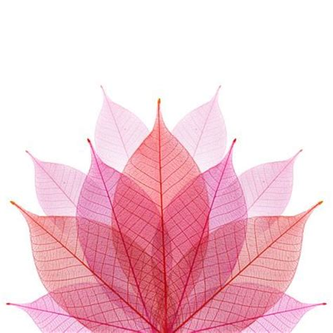 contour wallpaper abstract leaves 17 best images about leaves wallpaper for walls on