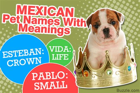 mexican puppy names 100 mexican names with their meanings for your puppy