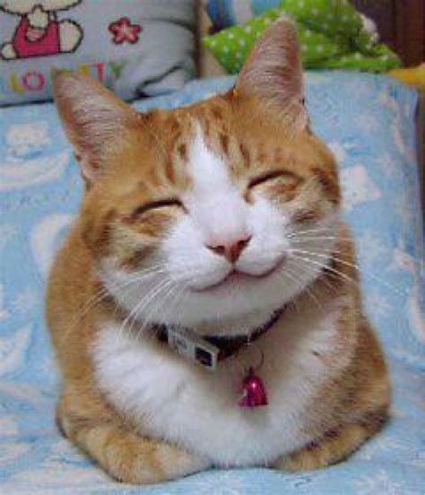 Smiling Cat file so happy smiling cat jpg wikimedia commons