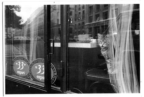 best seat in the house book best seat in the house cats in windows by m j bronstein