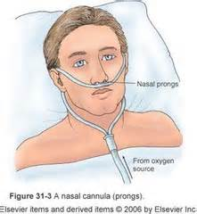 most comfortable nasal cannula nursing 111 oxygenation essay medicine and health articles